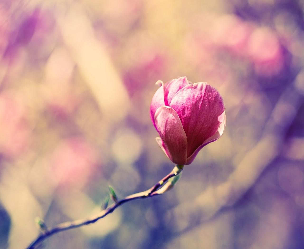 blossom-1187330_1280