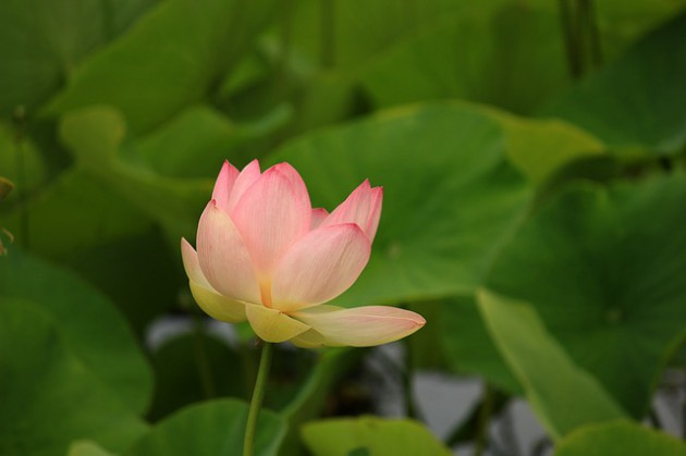 water-lily-190203_640