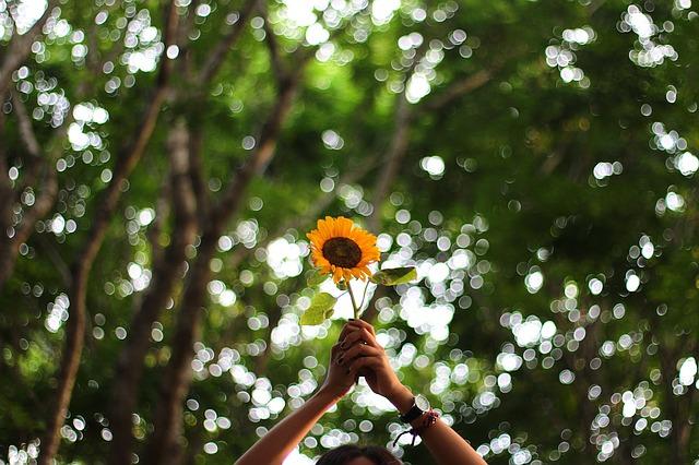 flower-1245700_640