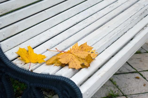autumn-leaves-1735984_640