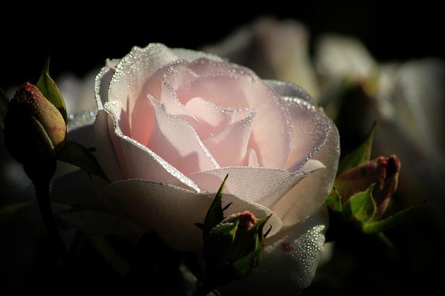 pink-2893502_640