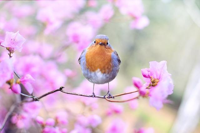 spring-bird-2295436_640