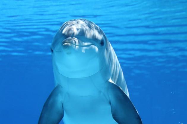 dolphin-203875_640