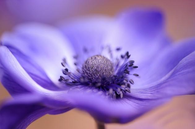 flower-3139424_640