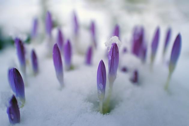 flower-3161201_640