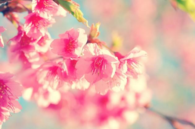 flower-2686480_640