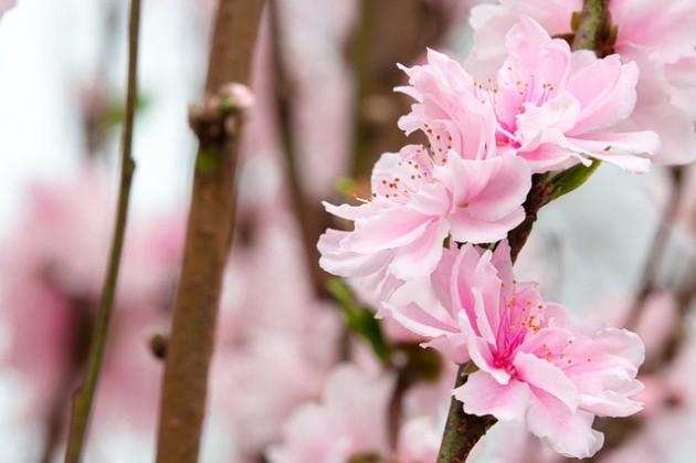 flower-3071475_640