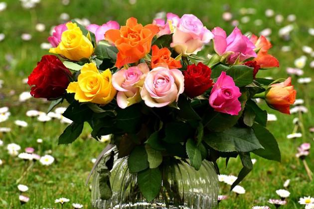 roses-2230459_640