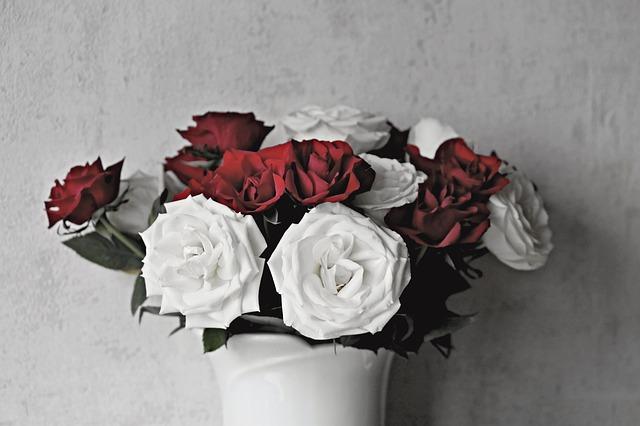 roses-3130315_640