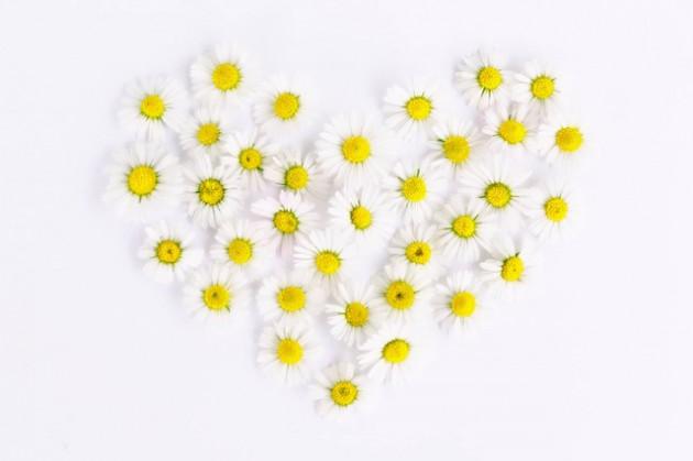 daisy-1535532_640