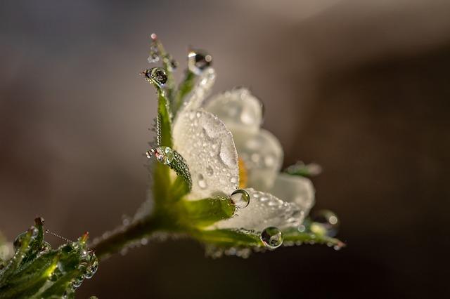 raindrop-3402550_640