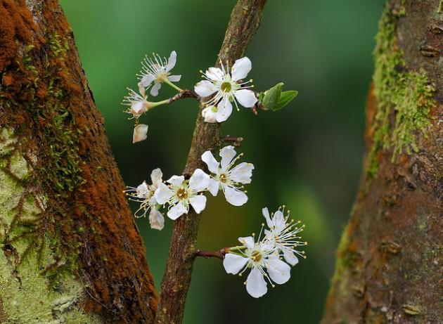 flower-3995835_640