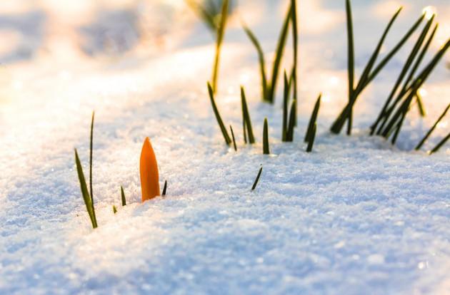 spring-awakening-3132154_640