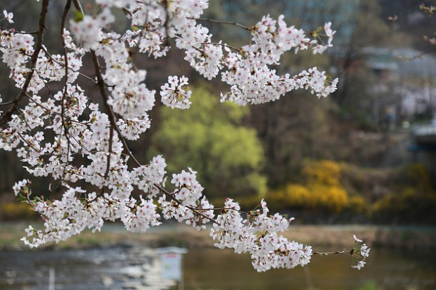 flowers-4031397_640